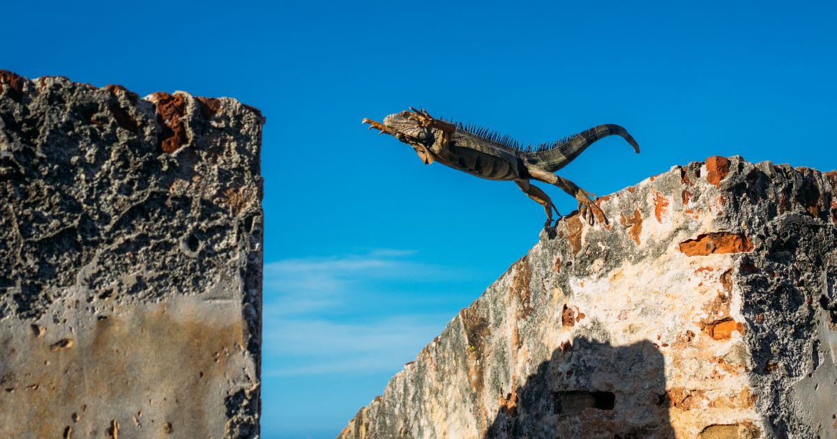 ReWire 178: Humans Are Chameleons