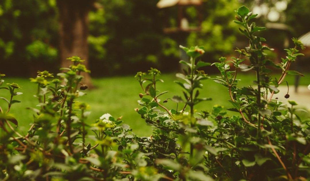 ReWire 455: It Takes Longer To Grow Organically