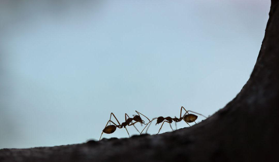 Mental Midgets vs. Ant Mentality